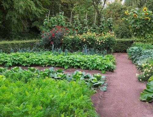 Veteményes kerttel az egészséges önellátásért!