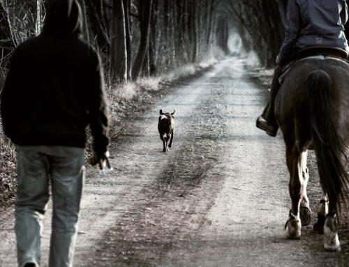 Tájékoztatás állattartói kötelességekről