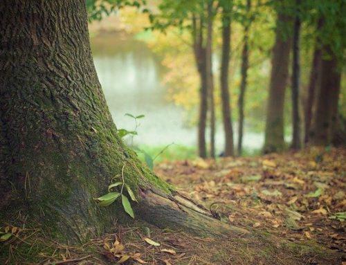 Részvételi lehetőség a Budapesti Corvinus Egyetem kutatásában – Milyen erdőgazdálkodást szerenének a környéken?