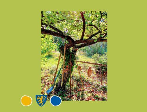 A fák védelméről – az új rendelet magyarázata